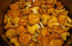 Лисички, маринованные в масле — простой и вкусный рецепт!
