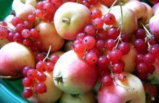 Варенье из яблок с красной смородиной — поделитесь впечатлением!