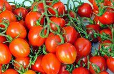 Квашеные сливовые помидоры — идеальная закуска!
